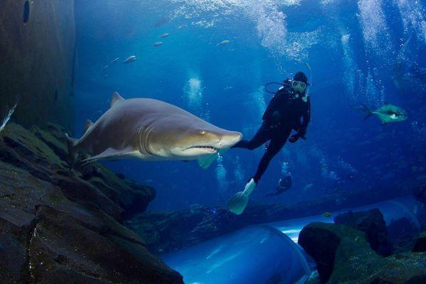 swim-with-sharks-in-lanzarote_1