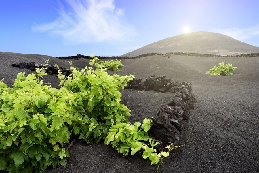 lanzarote-volcano-south-tour_4
