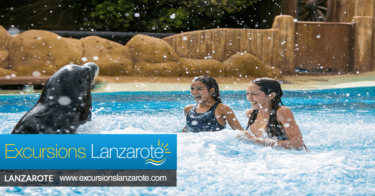 Swimming With Sea Lions In Lanzarote Excursions Lanzarote